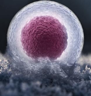 Заморозка яйцеклеток