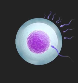 ЭКО (IVF)